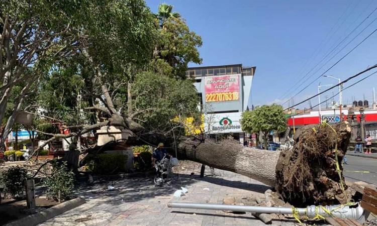 Fuerte viento tira árbol del zócalo de San Martín Texmelucan, dejando a un lesionado