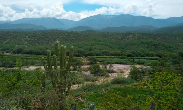 Hallan pastizales milenarios en zona cercana a la Reserva de la Biosfera