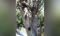 40 árboles en Tehuacán serán derribados por plaga de hongo negro