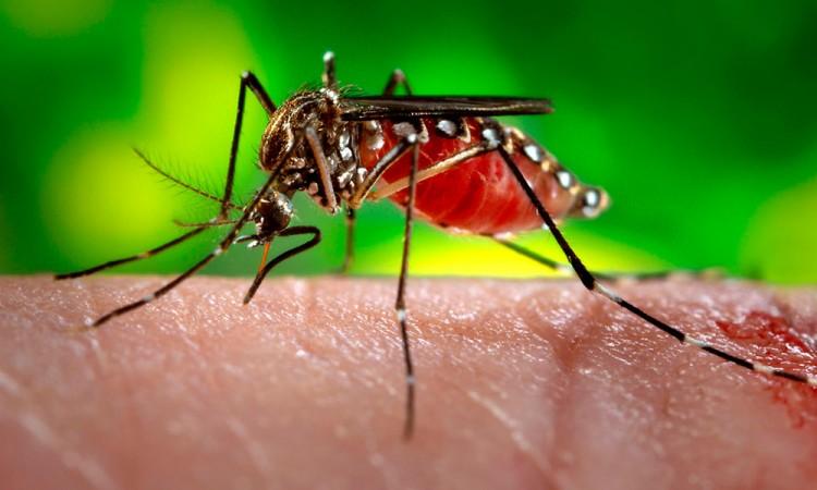 Registran primer caso de microencefalia por zika en México