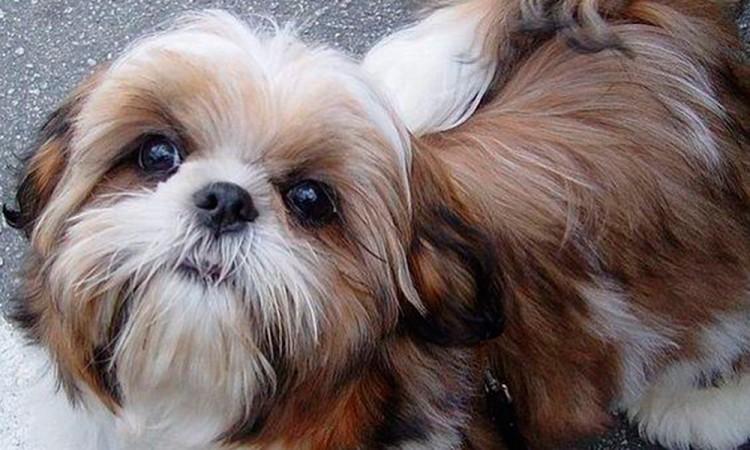 Roban perro de 30 mil pesos en CdMx
