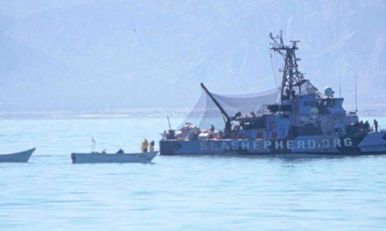 Ecologistas de la vaquita marina acusan ataque a su barco
