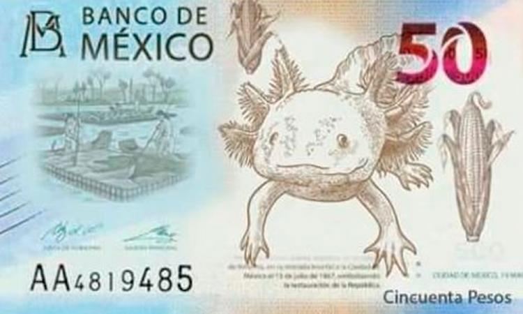 El billete de 50 pesos tendrá nueva imagen