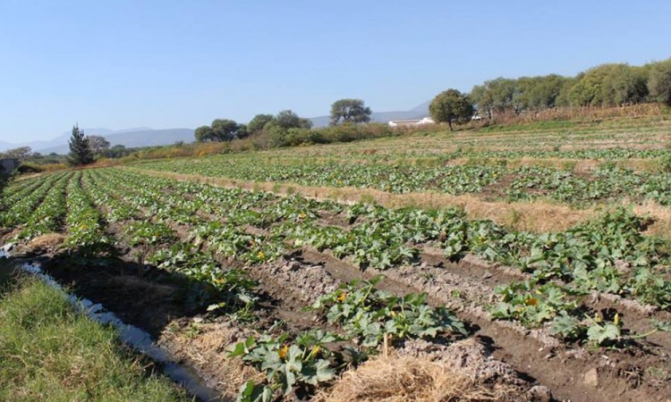 Cierre de frontera afecta a productores del campo por Covid-19