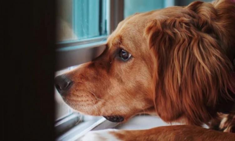 Lanzan iniciativa para cuidar mascotas de médicos durante la contingencia