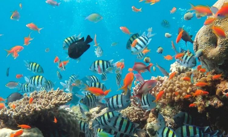 UNAM estudia organismos marinos para crear medicamentos
