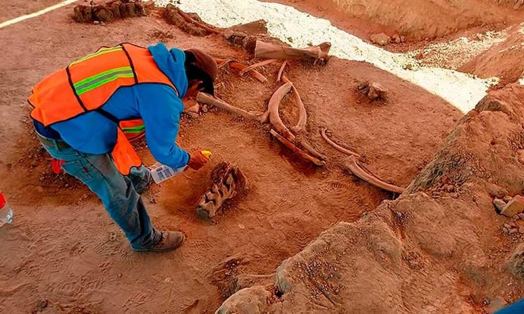Hallazgo de 60 mamuts en Santa Lucia da pistas de su extinción