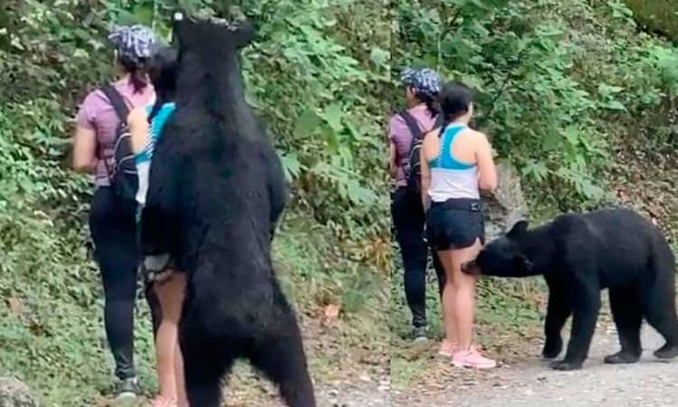 La historia detrás de la selfie con el oso negro