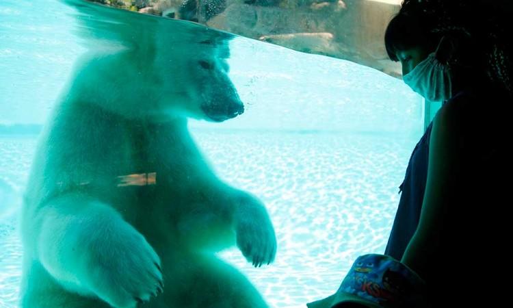 La Nueva Normalidad: Zoo de Guadalajara reabre tras cuatro meses en cuarentena