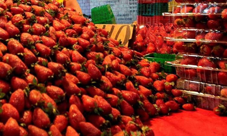 Los frutos rojos no dejarán de crecer pese a la pandemia en México