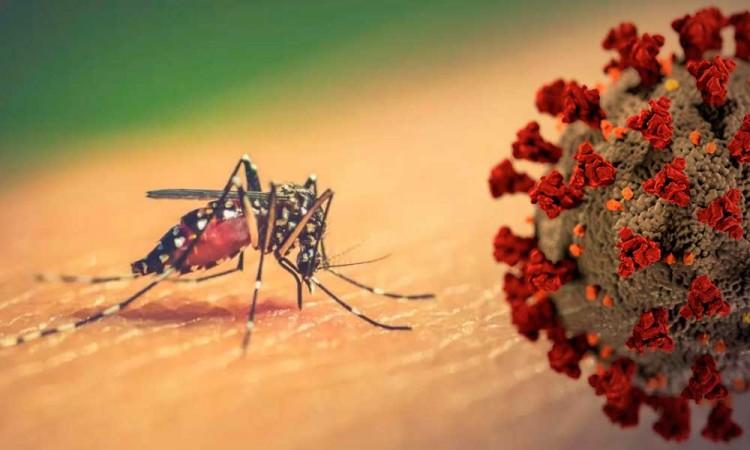 ¡Wey ya! Dengue, zika y chikunguña amenazan con complicar la pandemia del Covid