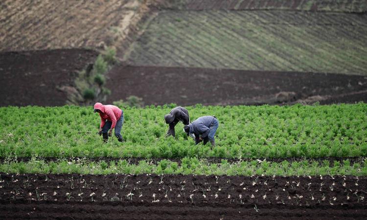 México, EE.UU. y Canadá apuestan por comercio agrícola durante  pandemia