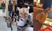 Captan a mujer paseando a cachorro de tigre en Centro Comercial de Polanco