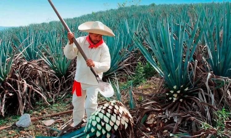 Nueva Zelanda reconoce el tequila mexicano como marca registrada