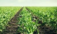 Para que trabaje el ganso: Consejo Agropecuario propone gran alianza con AMLO