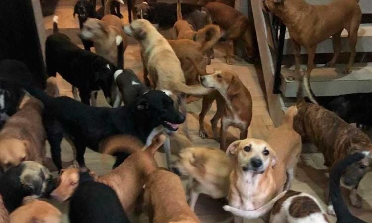 ¡Héroes sin capa! Cuidan a perros callejeros mientras Delta toca Cancún