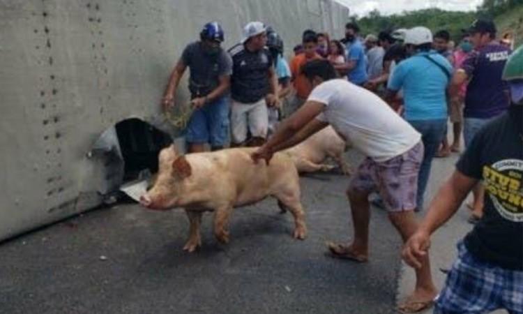 Habitantes de Campeche saquean tráiler volcado