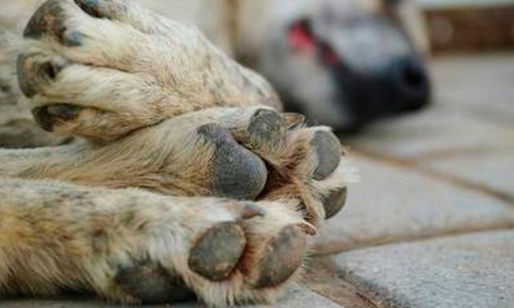 Matan a 17 perros con comida envenenada en Jalisco