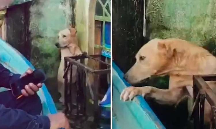 ¡Bravo! Marina rescata a un perrito de inundaciones de Tabasco