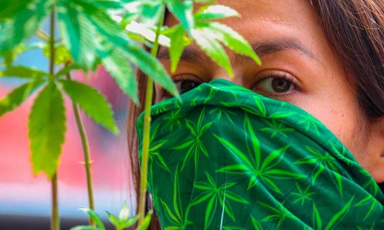 Senado discutirá marihuana legal entre protestas de consumidores