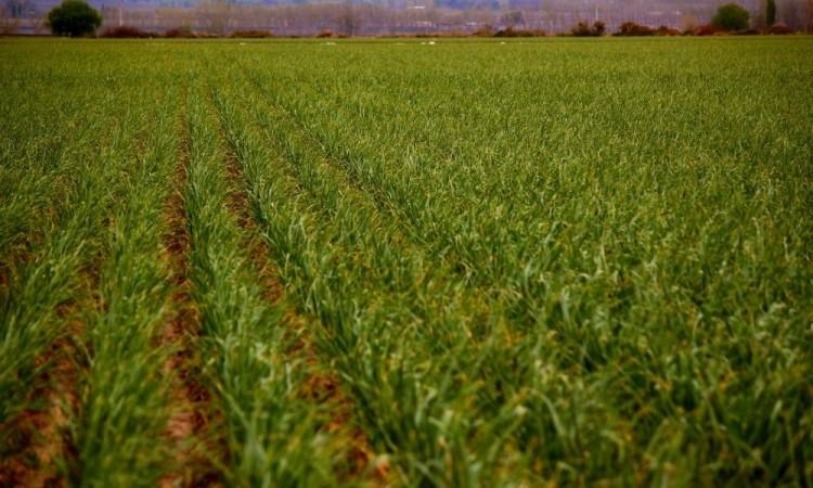 El Foro Global Agroalimentario de México arrancó este miércoles.