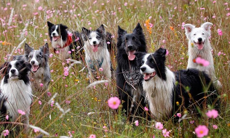 Cinco perros han dado positivo a la Covid-19 en los últimos meses en México