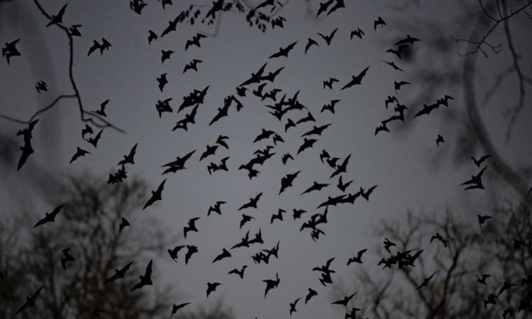 México y Centroamérica inician un conteo de murciélagos que busca concienciar