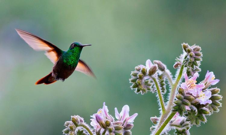 Un proyecto fotográfico ayuda a cuidar la fauna endémica de CDMX