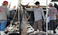 México levanta la veda de atún 2020: Sader