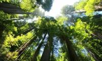 ¡Al fin! Lanzan programa internacional para proteger la biodiversidad