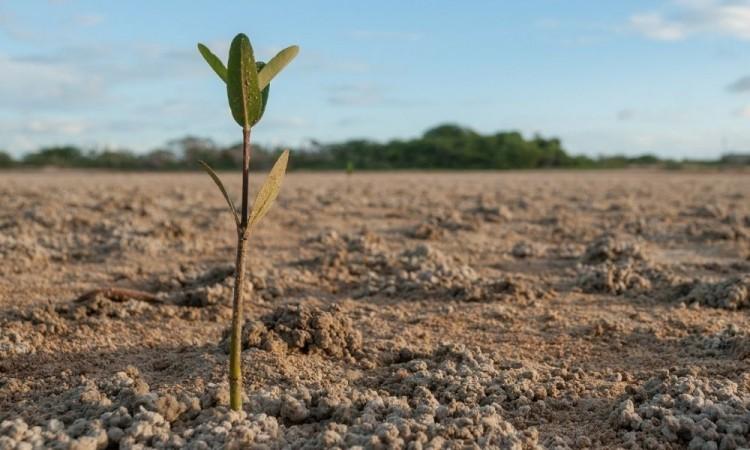México y Estados Unidos sumarán esfuerzos para mejorar sector agroalimentario