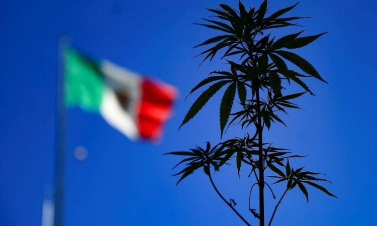 Diputados avalan y regresan al Senado ley para consumo de marihuana