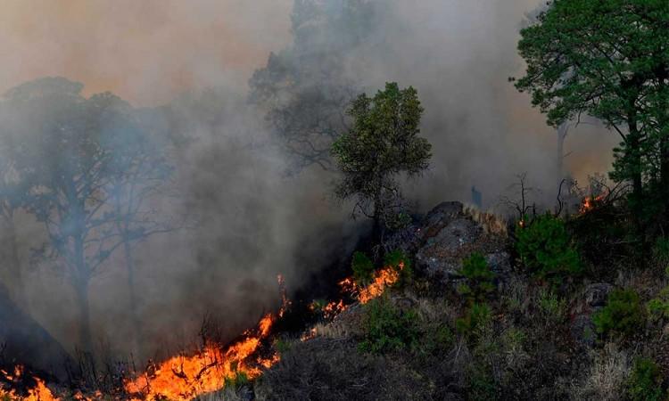 Incendio forestal en El Tepozteco, hasta ahora el más grande de México