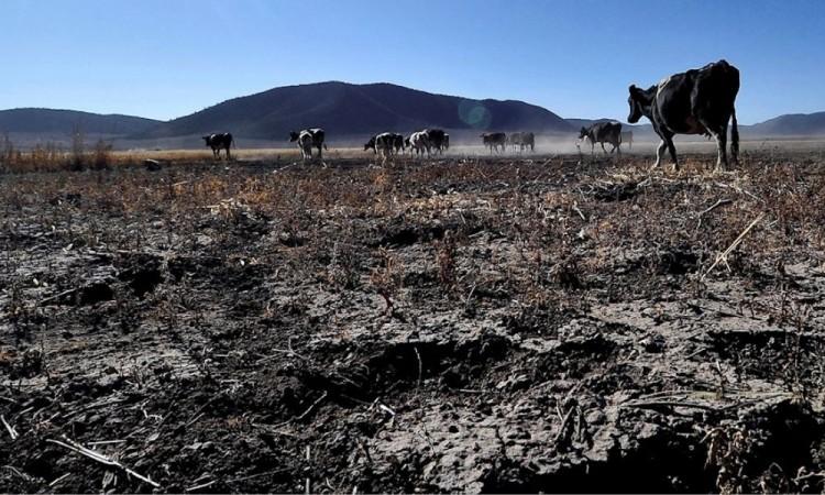 Sequía golpea al agro mexicano y anticipa una menor producción