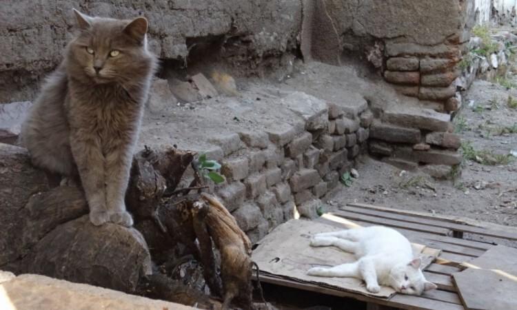 Por coronavirus, refugios de mascotas se verán afectados