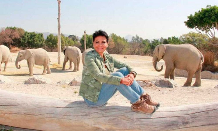 Fallece por muerte cerebral Amy Camacho, directora de Áfricam Safari
