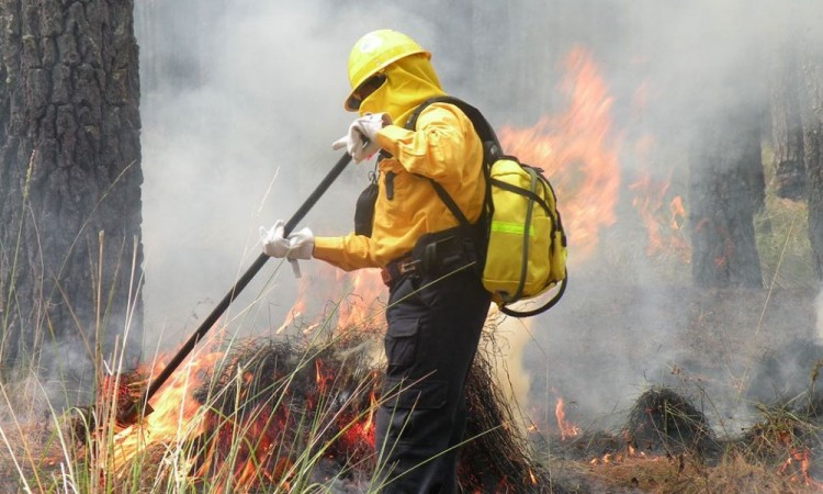 Puebla, séptimo lugar en incendios forestales: Manrique Guevara