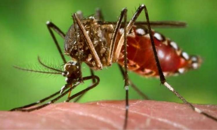 Registra Puebla casi 100 casos de dengue