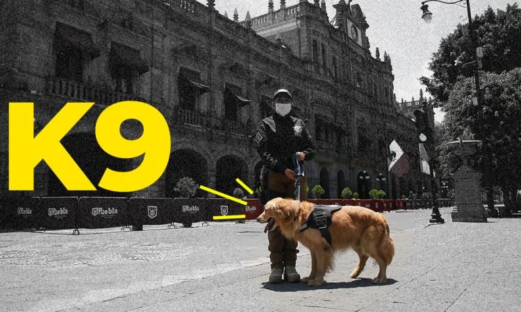 Así es el grupo K9, los perros policías que compró el Ayuntamiento para combatir el crimen