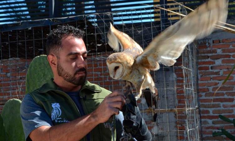 BUAP cumple 5 años de conservar a lechuzas y búhos de Puebla
