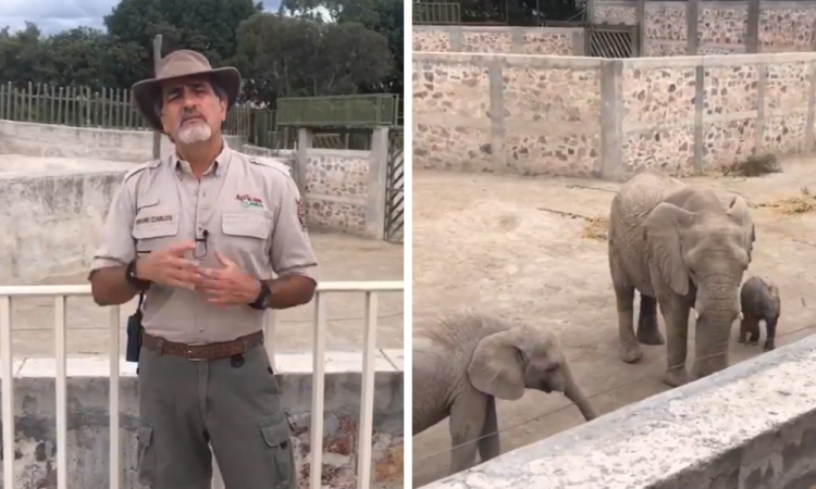 Elefantes del zoológico.