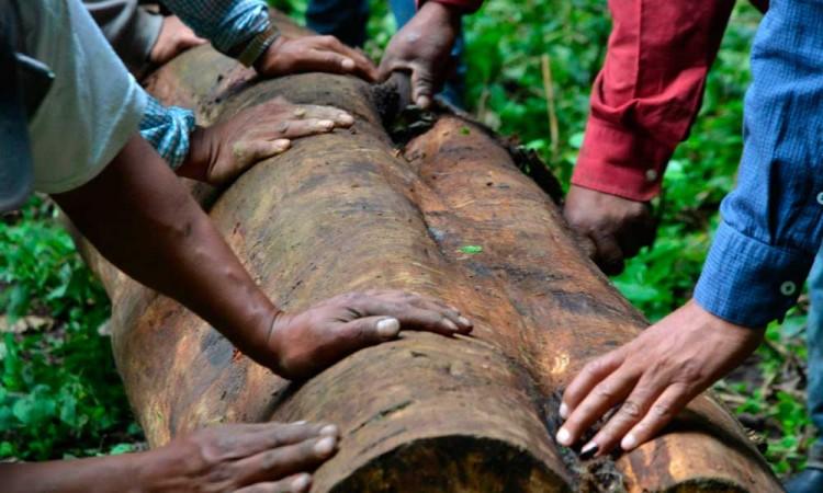 Exclusión y reconocimiento de sus derechos: una lucha permanente de los pueblos originarios
