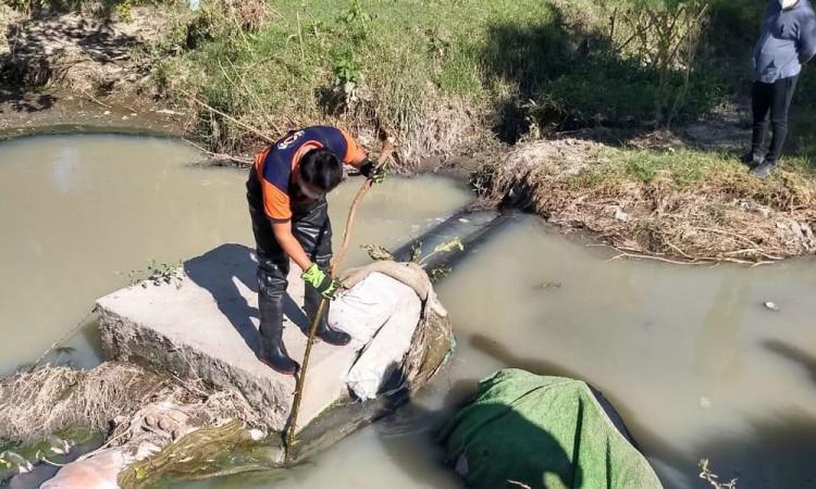 Presencia de un caimán en el río Atoyac