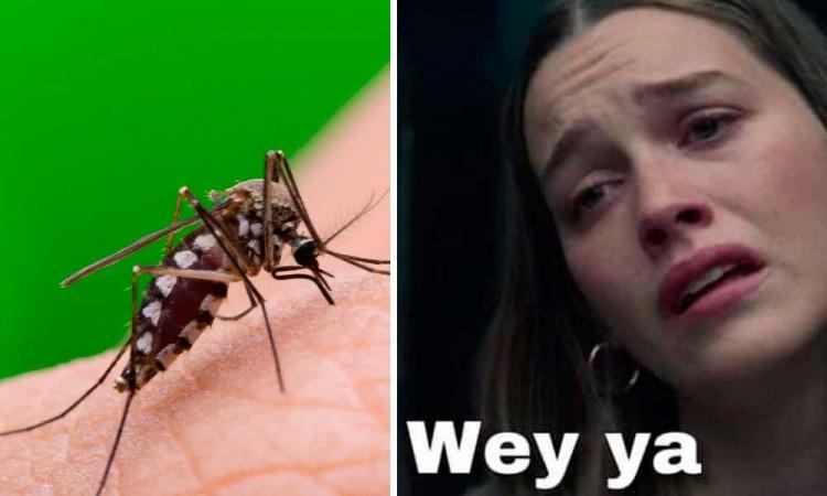 Salud alerta de tendencia a la alza de contagios de Dengue en Puebla