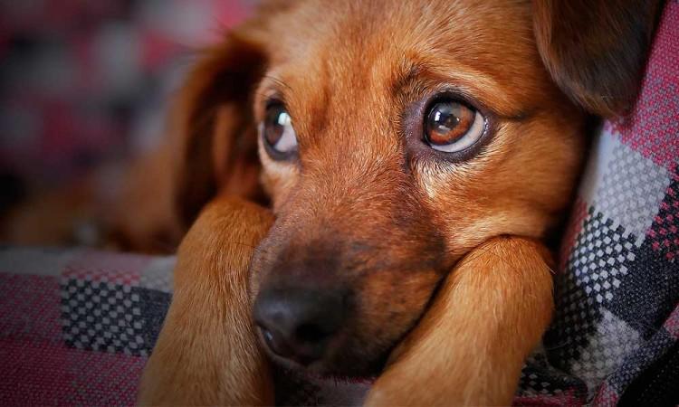 Cabildo analiza una tenencia a mascotas en Puebla para el 2021