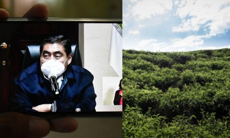 Declararán a Flor del Bosque como reserva ecológica y podría ser expropiado