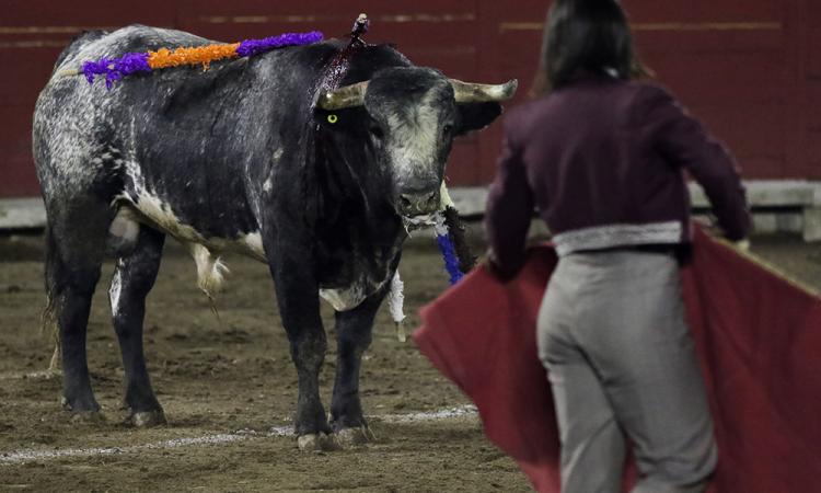 Activistas piden a las autoridades prohibición de corridas de toros en la capital