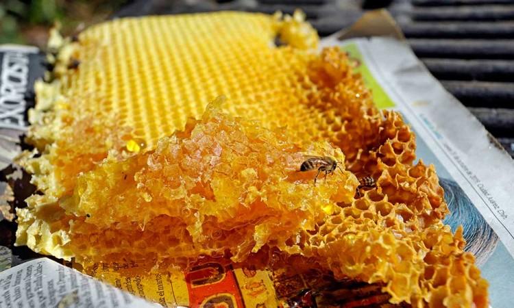 Un poblano rescata la producción de miel como sustento económico