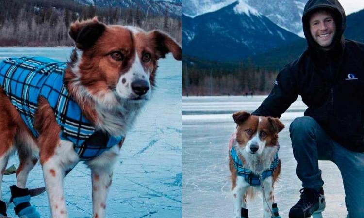 21 perros rescatados en Puebla serán adoptados por familias de Canadá