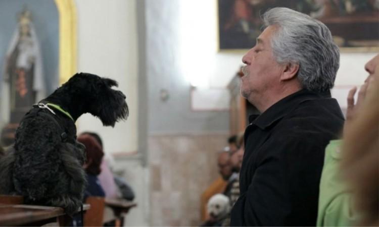 Con celebración atípica bendicen a mascotas en San Antonio Abad
